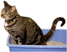 cat-on-bucket